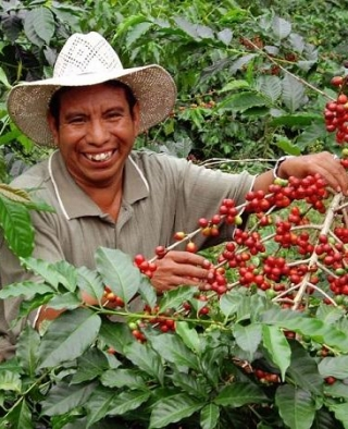 Differences of Single Origin coffee beans line